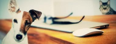 10 Jobs for Animal Lovers